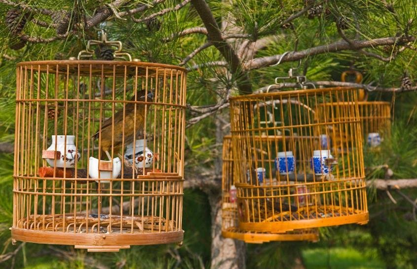 鸟笼不能放置的位置有哪些?鸟笼位置摆放方法